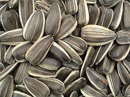 sunflower seeds 1
